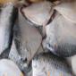 信阳供应冰鲜金线鱼 石斑鱼